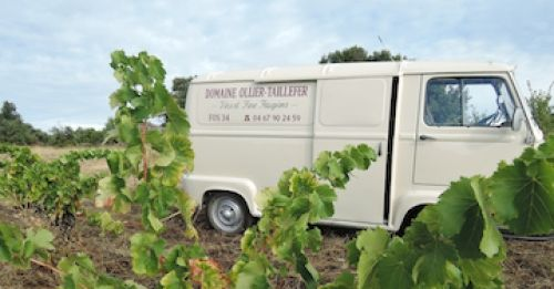 domaine ollier-taillefer_wines of languedoc