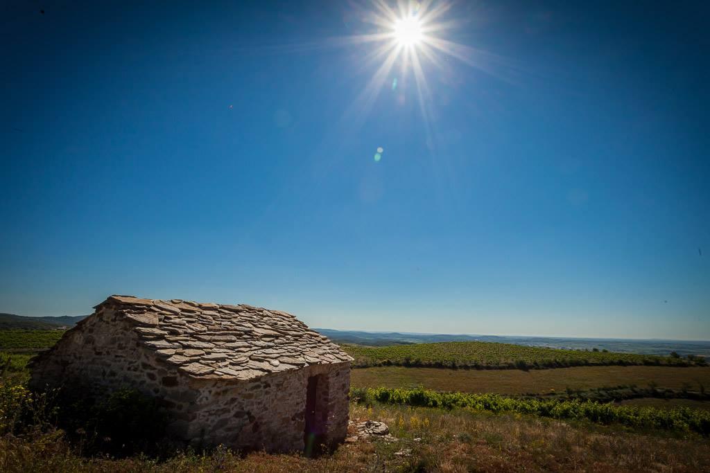 Wines of Languedoc